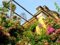 Hội An rực rỡ sắc hoa vào mùa hè