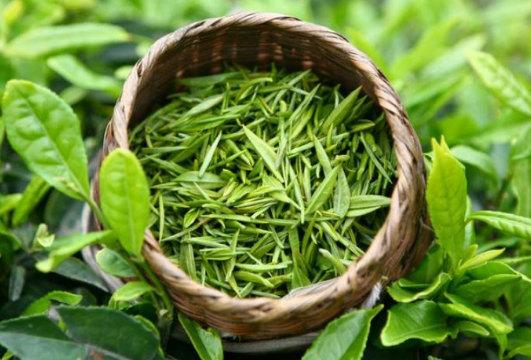 lợi ích từ trà xanh